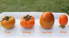 Persimmons come in astringent or non-astringent varieties.